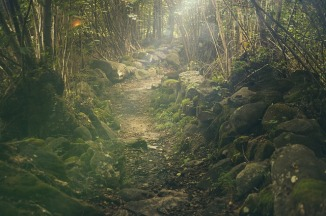 forestpath-438432_640
